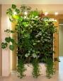 Зеленая стена, фитостена