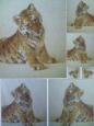 Декупажная карта «Тигрята»