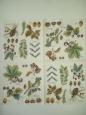 Салфетка для декупажа 545, «Энциклопедия растений»