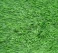 Искусственная трава Optigrass TR