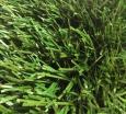 Искусственная трава Optigrass Ultra
