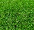 Искусственная трава Optigrass MX Relax