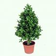 Искусственное декоративное дерево самшит