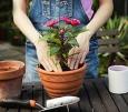 Пересадка растений