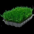 Семена травы