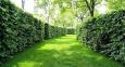 Живые изгороди