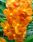 Орхидея. Челябинск
