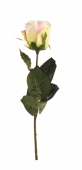 Роза Эквадор 70 см. Челябинск