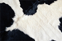 Коровья шкура