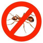 Уничтожение муравьев. Челябинск