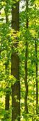 Панно Moda Interio арт. 1-153 Кленовый лес. Челябинск