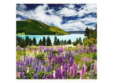 Фотообои DECOCODE Новая Зеландия 31-0051-PG. Челябинск