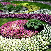 Оформление клумб, цветников, рабаток. Челябинск