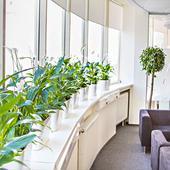 Озеленение офисов. Челябинск