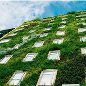 Озеленение фасада. Челябинск