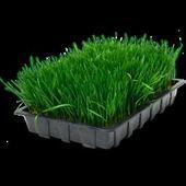 Семена травы. Челябинск